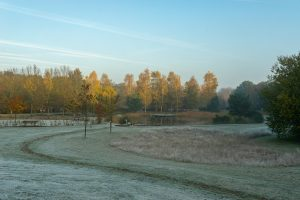 Daoler tuun in de winter