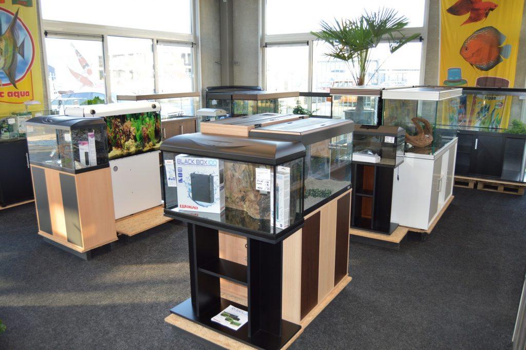 Foto G&D Koi en Aquarium