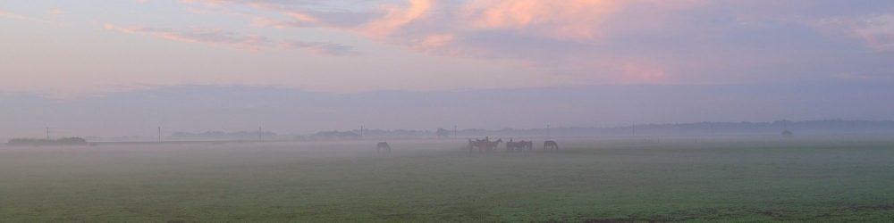 Bij zonsopkomst paarden in de mist.