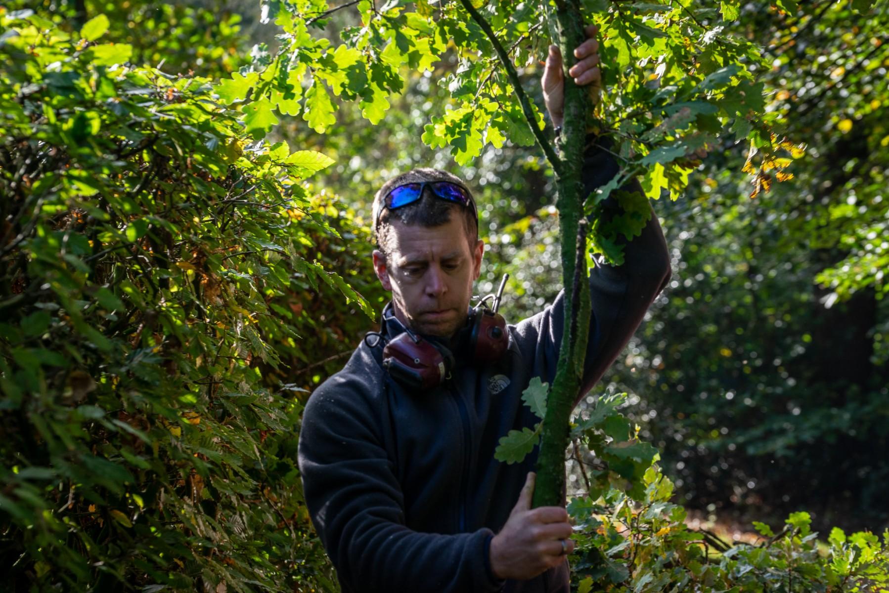 Foto Guus Thijssen Timber Thijssen boomverzorging