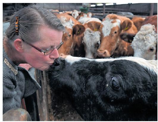 Foto Vleesveebedrijf De Til boerin met kalf