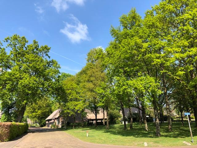 Foto Eikenbomen in Dalen