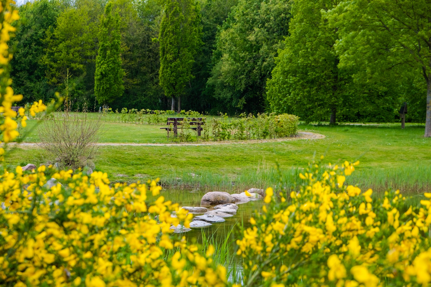 Foto voorjaar Daoler Tuun