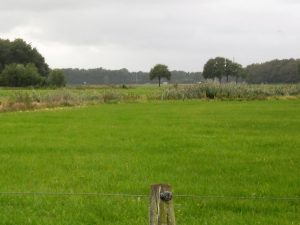 Foto uitzicht grasland Klopmenpadtien
