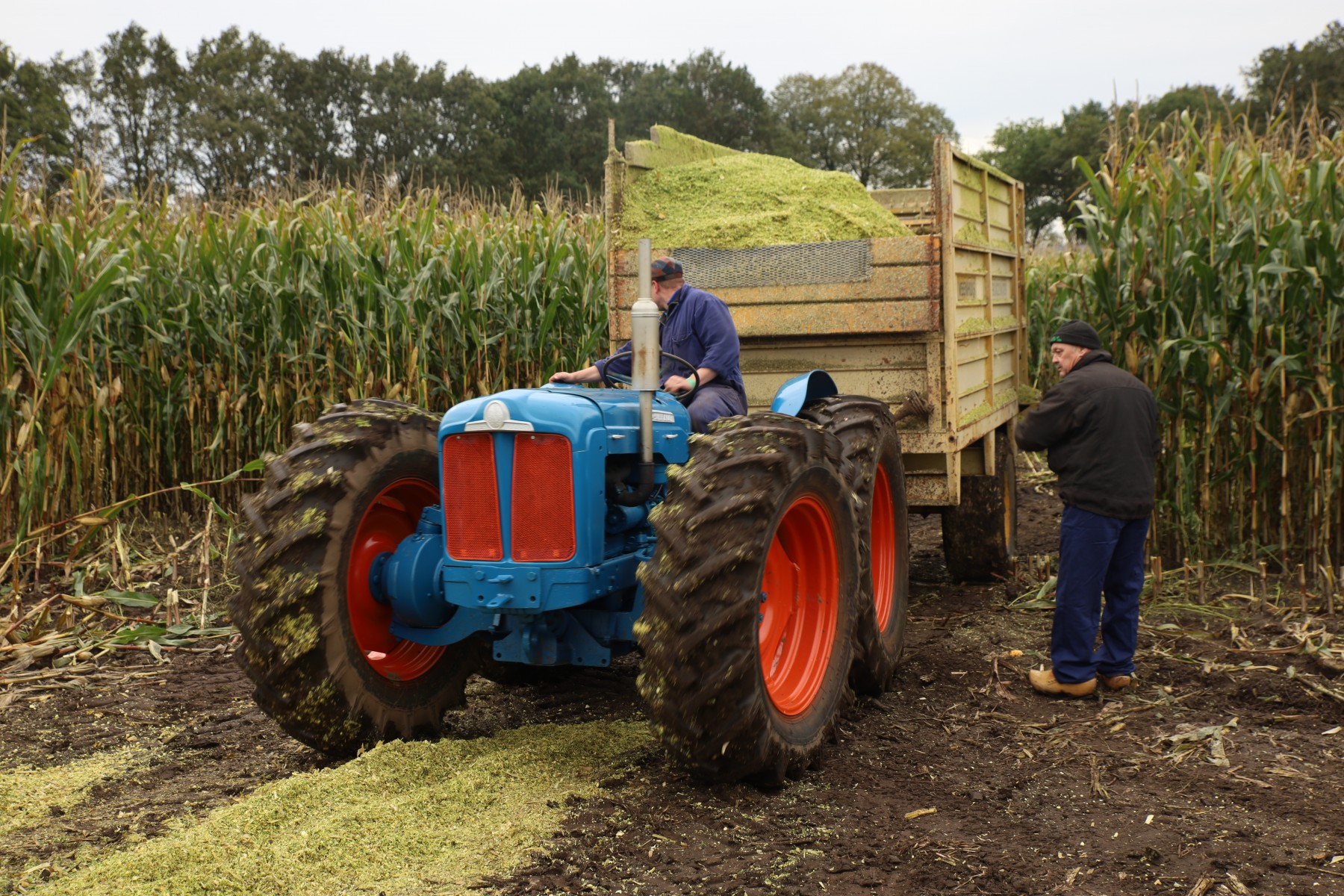 "Foto van een oldtimer ""trekker"" met oldtimer wagen vol met gehakselde mais; oldtimer hakseldag in Dalen, oktober 2019."