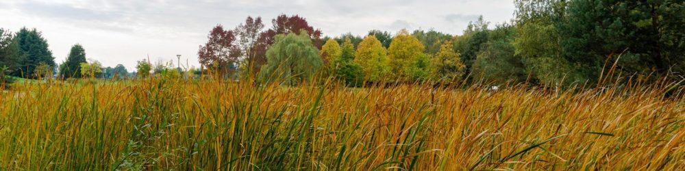 Foto van de Daoler Tuun in de herfst