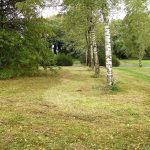 Foto gras en bomen Daolder Tuun
