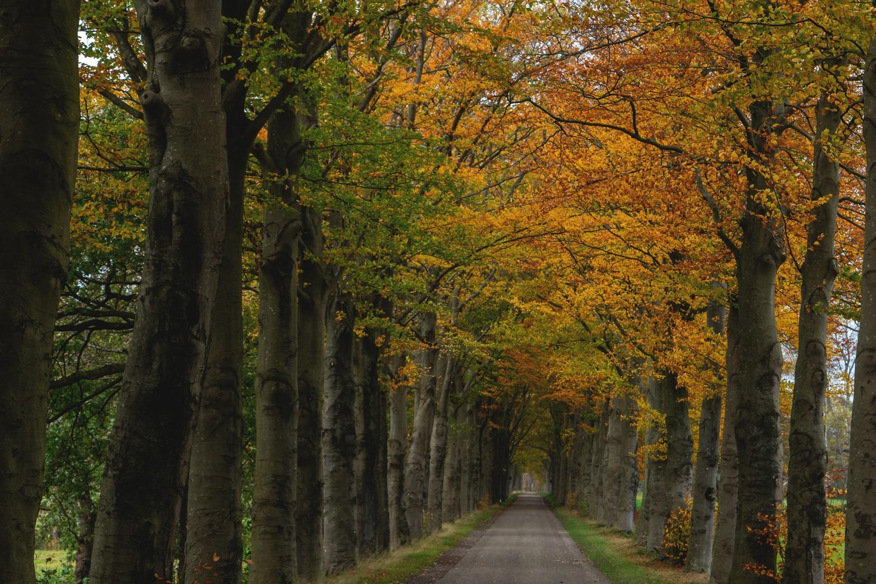 Foto Herfst Oude Dalerveense straat