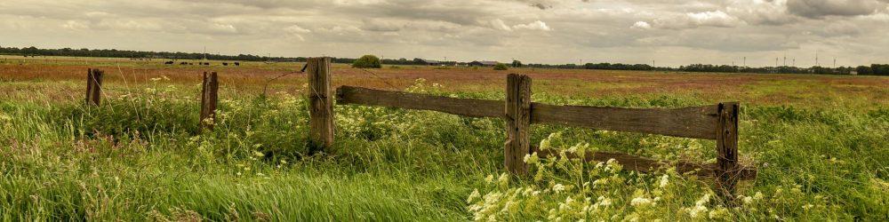 foto-voorjaar-hek