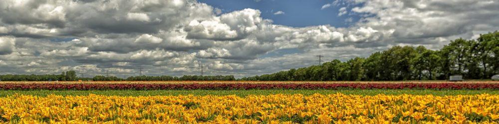 foto-voorjaar-bloemen