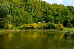 Foto voorjaar met brem Daoler tuun