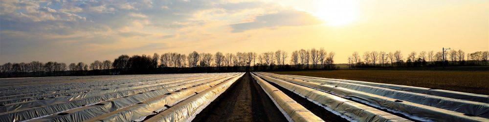 Foto zonsondergang met aspergeveld