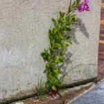 Foto steen met bloem