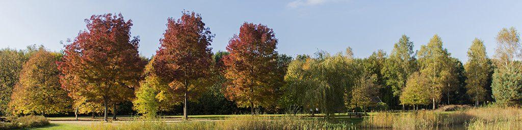 Oktoberfoto fotowedstrijd