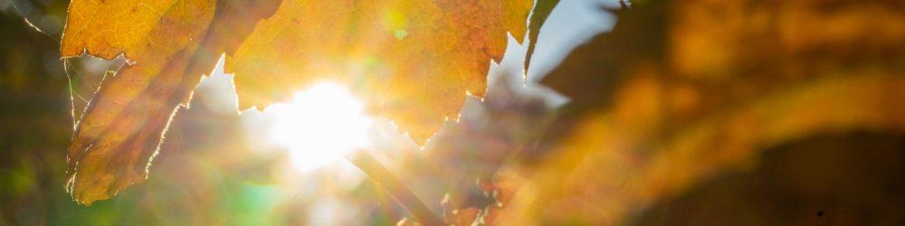 Foto herfsblad met zonnestralen