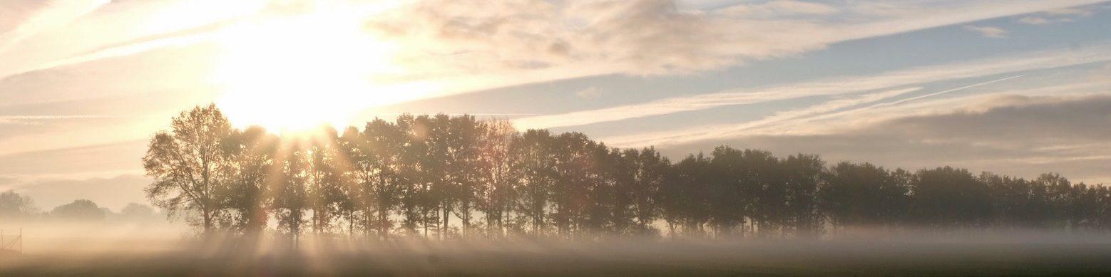 Winnende foto fotowedstrijd november mistige veld met bomen en zonnestralen