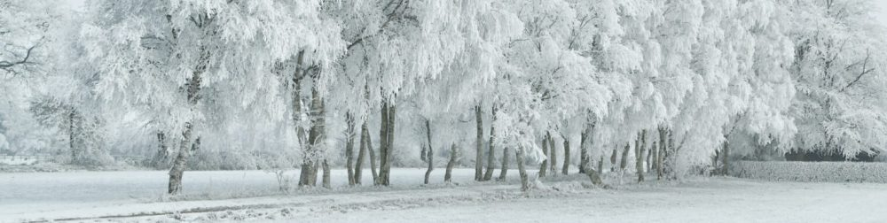 foto de mars winter