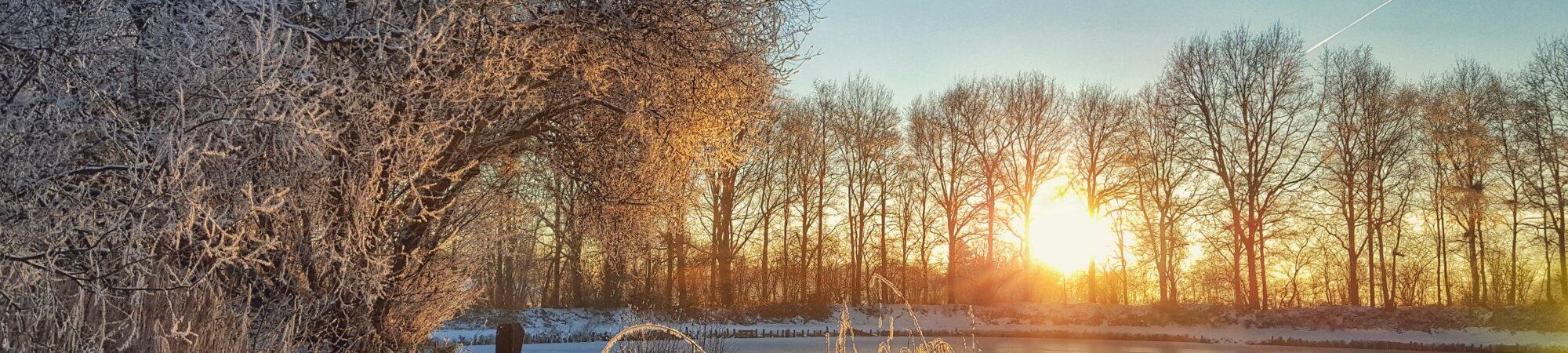 Winterfoto Visvijver De Bongerd met zon en sneeuw