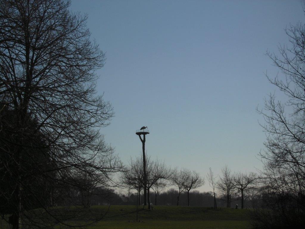 Voorjaarswerk in de Daoler Tuun met ooievaar op het nest