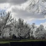 Foto lentebloei