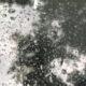 Kindergedicht: Regenbui